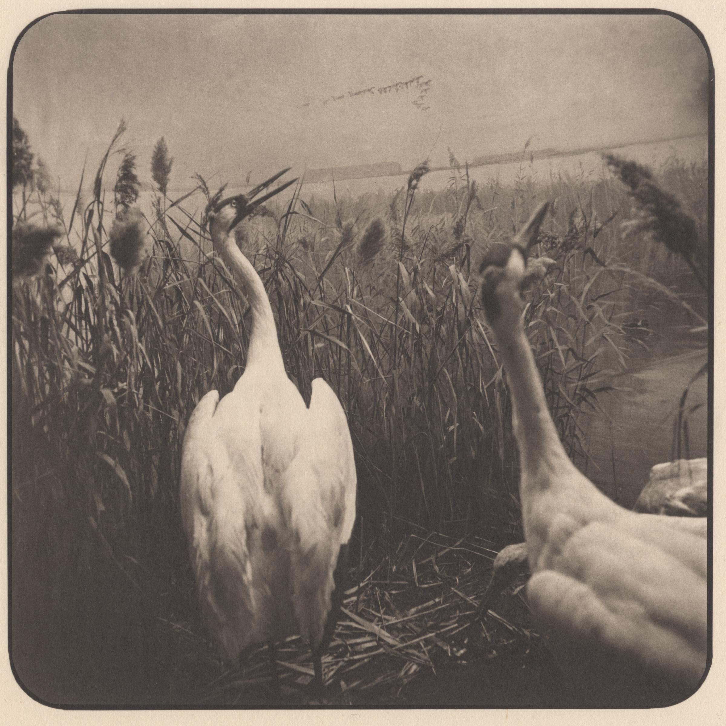 Takeshi SHIKAMA, Garden of Memory, Animals #17, 2012/2015, Tirage platine/palladium sur papier Gampi. Signé et numéroté par l'artiste au crayon. Edition de 12, 19,4 x 19,4 cm © Takeshi Shikama