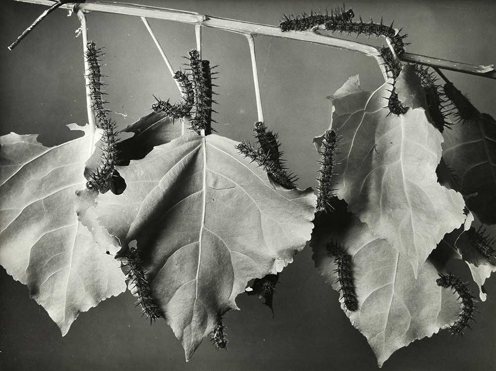 05 Margaret Bourke-White